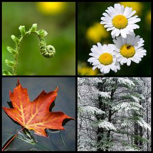 Four Seasons of Beauty