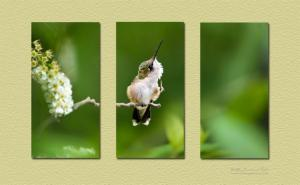 Hummingbird Triptych Wall Art
