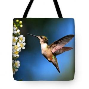 Hummingbird Gifts