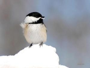 Winter Bird Photography Tips
